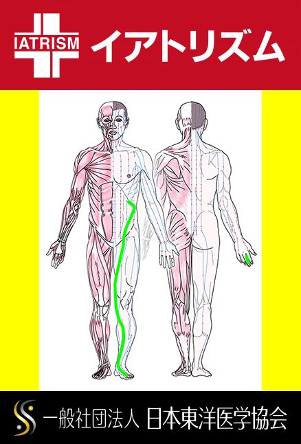 特定の臓腑と内属し表裏関係をも有する十二経脈の一つ足の『厥陰肝経』の流れが記された二体の人体立像図