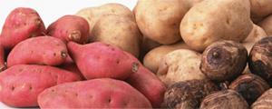 イアトリズム事典 知っておきたい『食品と栄養』で食品成分表 芋類 に用いられる 各種のイモ が居る風景