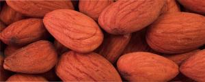イアトリズム事典 知っておきたい『食品と栄養』で食品成分表 種実類 に登場する アーモンド の居る風景