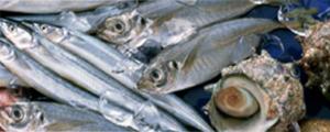 イアトリズム事典 知っておきたい『食品と栄養』で食品成分表 魚介類 に登場する 魚や貝たち が集う風景
