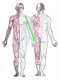特定の臓腑と内属し表裏関係をも有する十二経脈の一つ手の『太陰肺経』の流れが記された二体の人体立像図