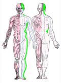 特定の臓腑と内属し表裏関係をも有する十二経脈の一つ足の『少陽胆経』の流れが記された二体の人体立像図