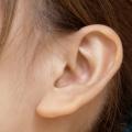 剃毛したかのように少ないモミアゲの後部に位置する薄幸を絵に描いたような小さなふくらみの無い耳たぶ