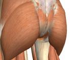 美しいヒップラインを決めるオシリの筋肉のふくらみシャネルの5番をまとったマリリン・モンローなのか?
