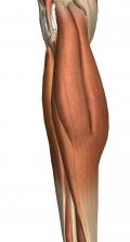 引き締まった細い足首へと伸びる美しいふくらはぎには黒い網タイツと金のアンクレットが一層の彩りを添える